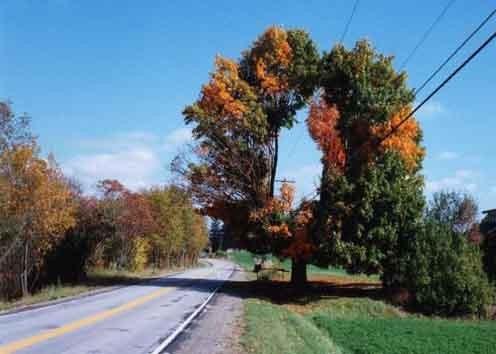 Les arbres  09c1963c