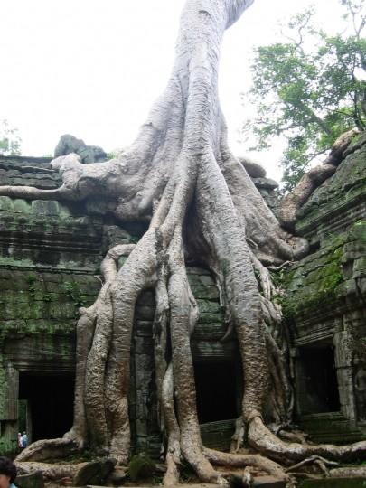 Les arbres  4bf97fcc