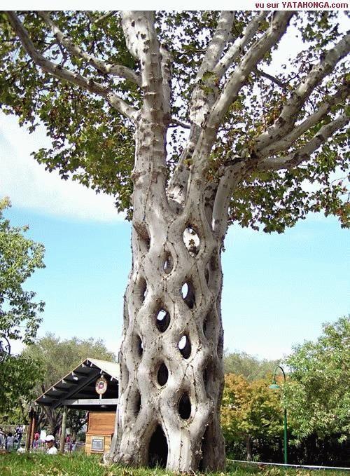 Les arbres  4dc092ac