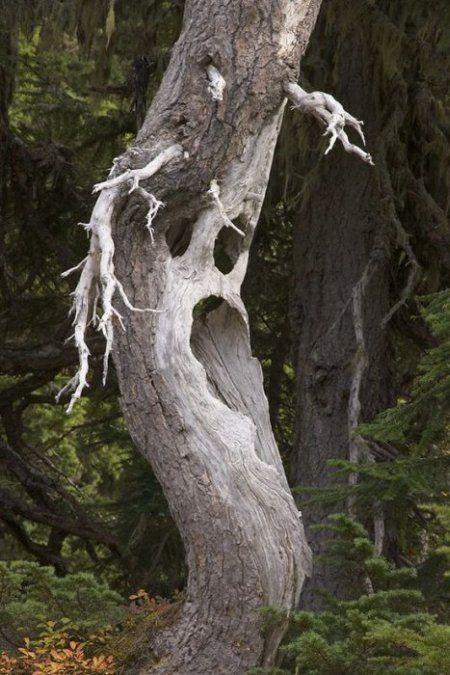 Les arbres  67e2dfb3