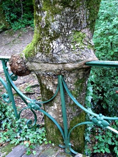 Les arbres  76ec776f