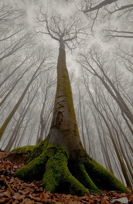 Les arbres  7ccc341c