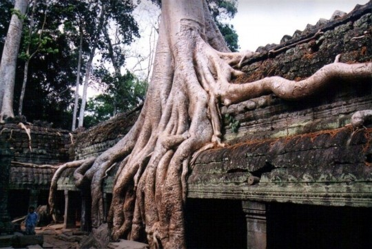 Les arbres  91d97aef
