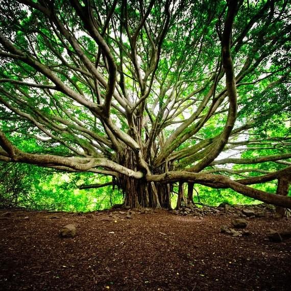 Les arbres  Ad07d17c