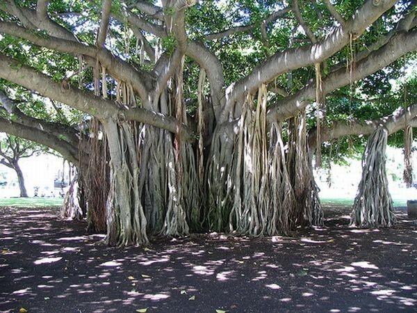 Les arbres  Aef90ea2