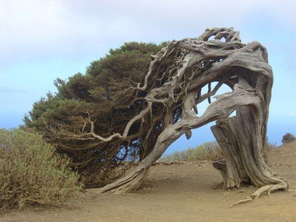 Les arbres  Bd2c512d