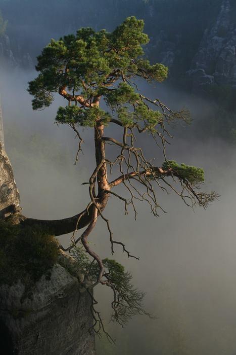 Les arbres  Fdbf01a2