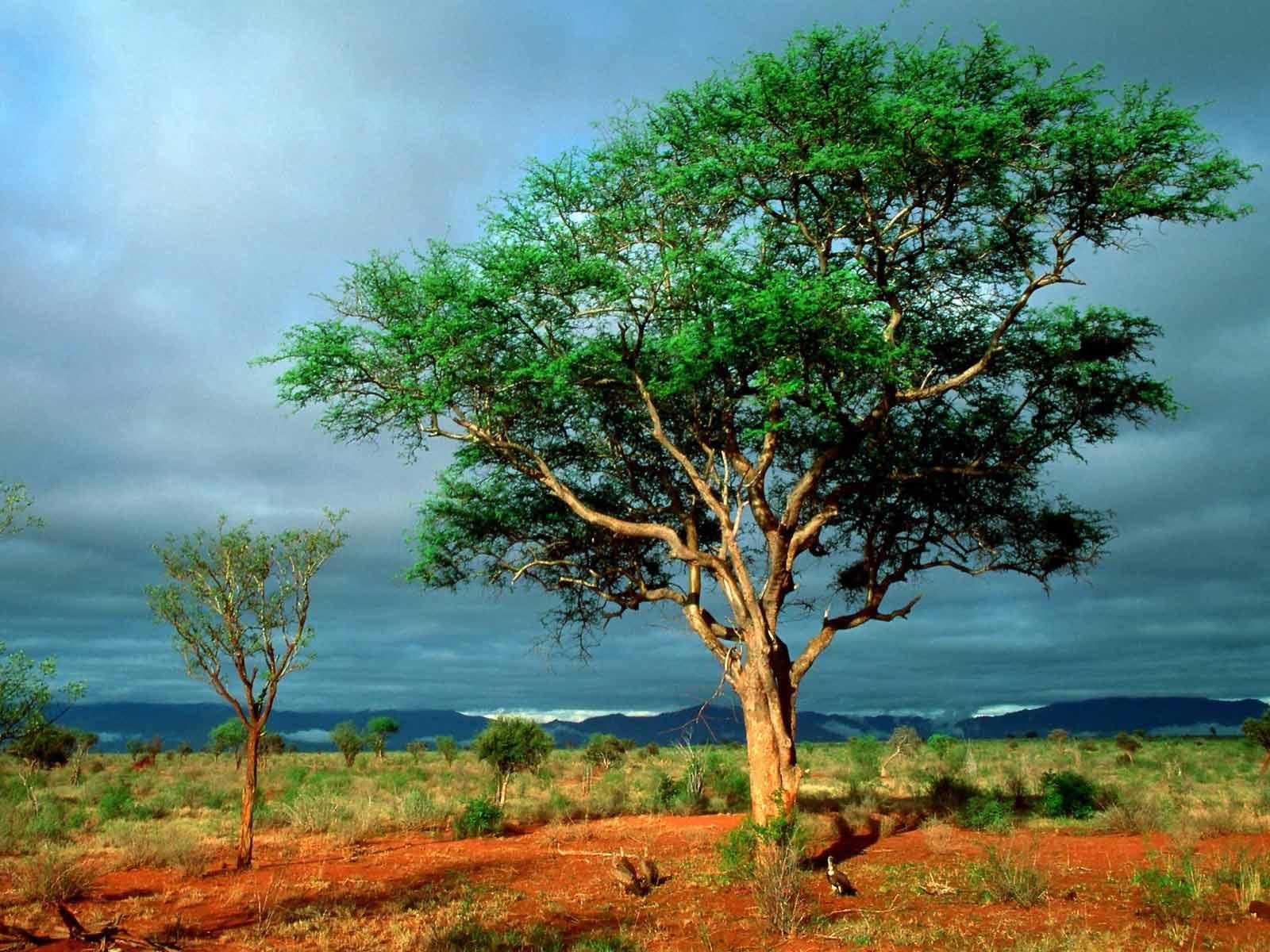 Arbres bizarres arbres normaux