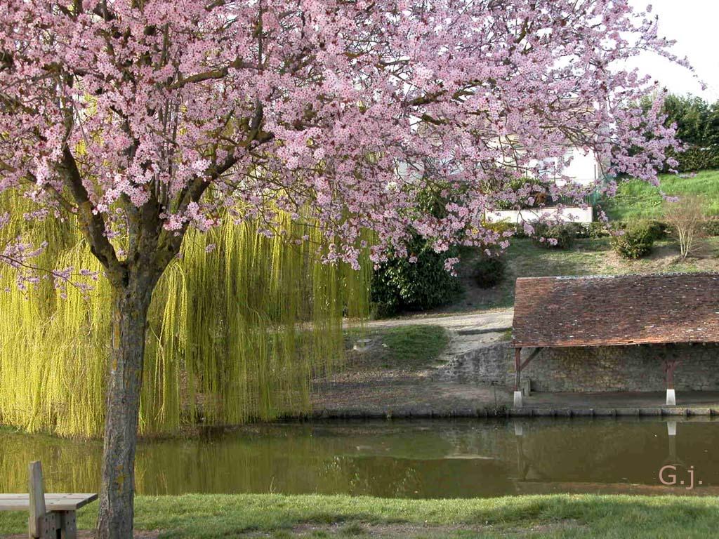 scenery spring pictures photos de paysage printemps. Black Bedroom Furniture Sets. Home Design Ideas